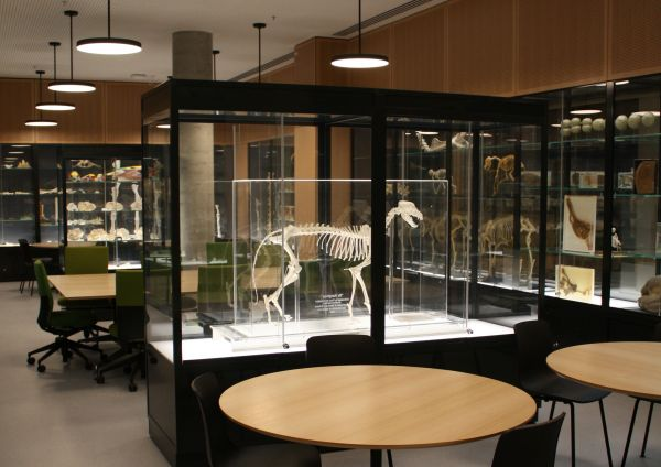 WEBS Object Based Learning Area showcasing the Veterinary Anatomy Collection